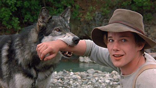 5 лучших фильмов про волков