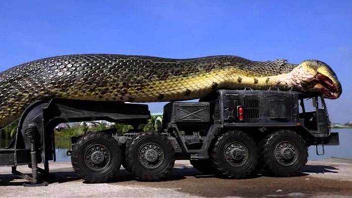 13 удивительных фактов о змеях