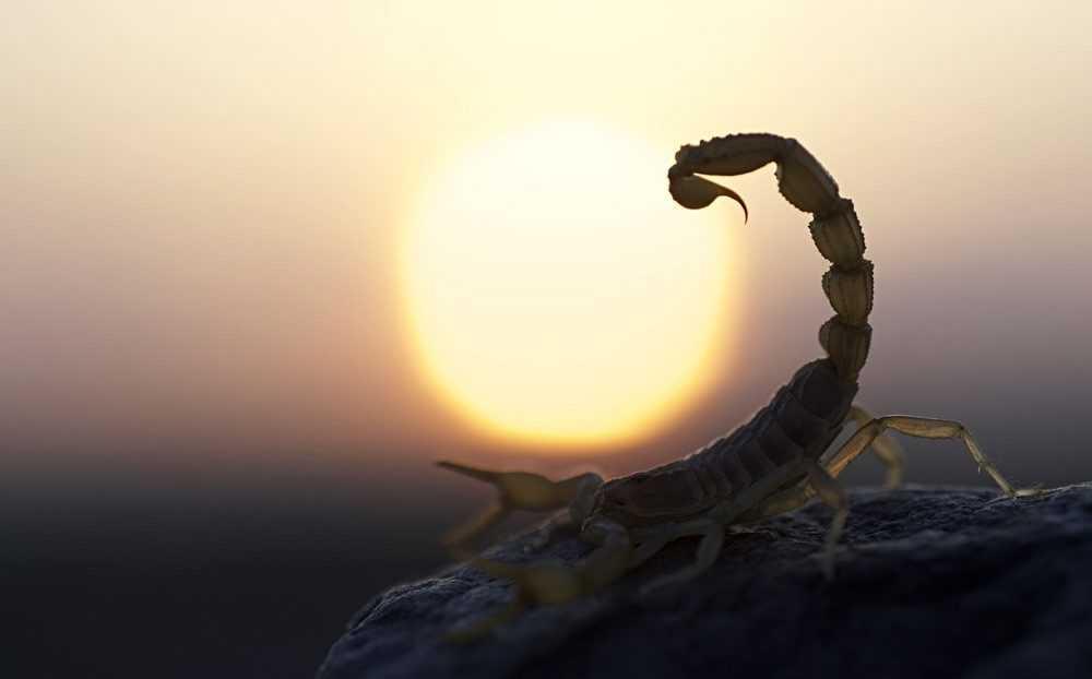 11 невероятных фактов о скорпионах