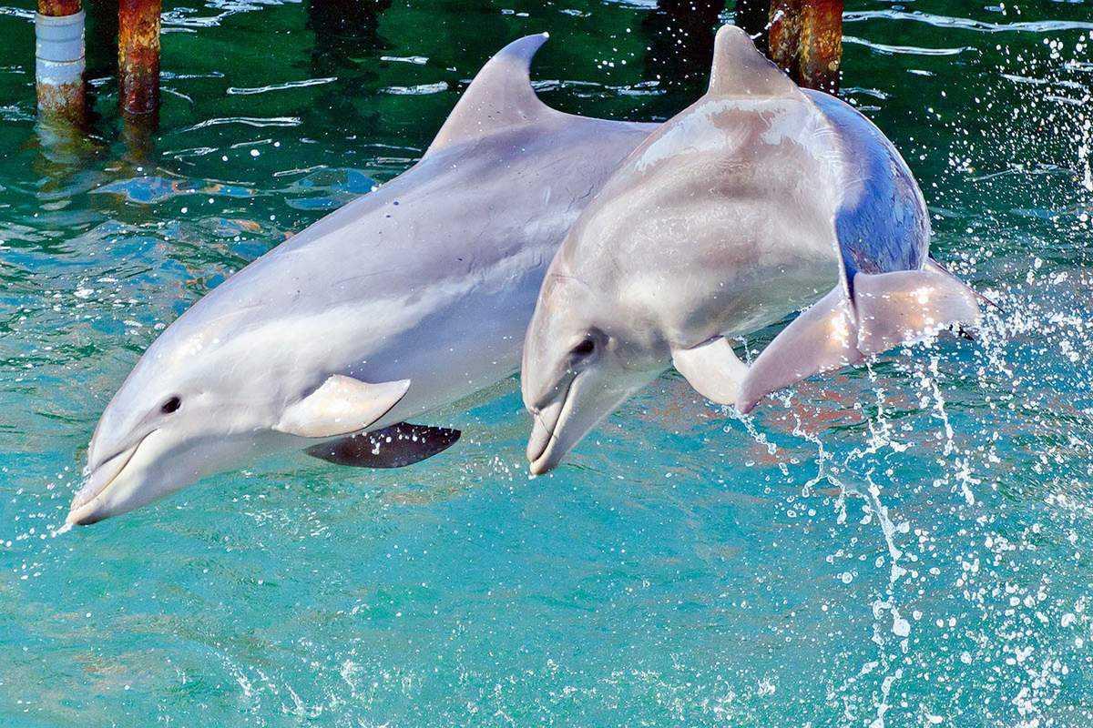 10 малоизвестных фактов о дельфинах